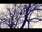 mr.coon – old movie