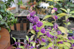 13. Gartenlust Lana 92