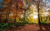 Landeswetterdienst: Kühlster Herbst seit dem Jahr 2010