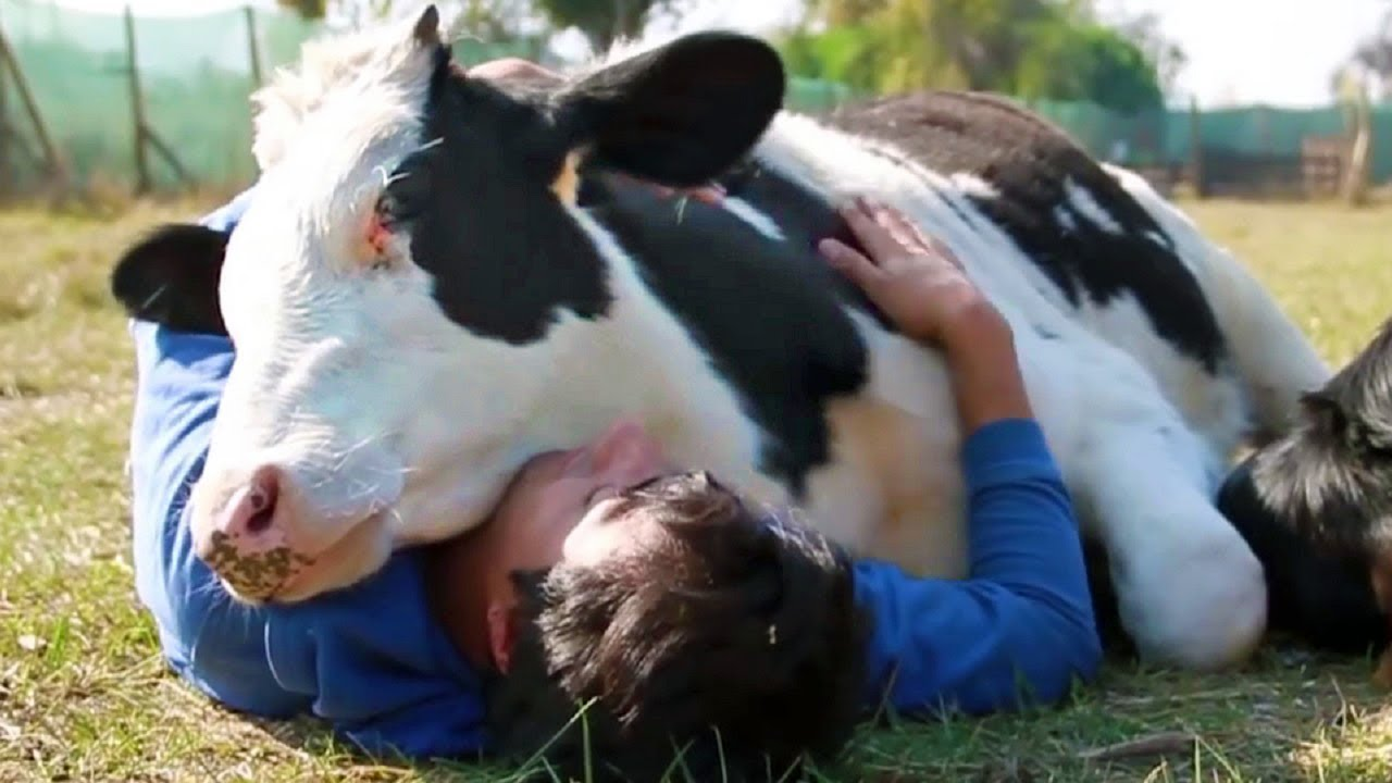 Animals Show Love for Humans – Animals Hugging People – Animals Cuddling