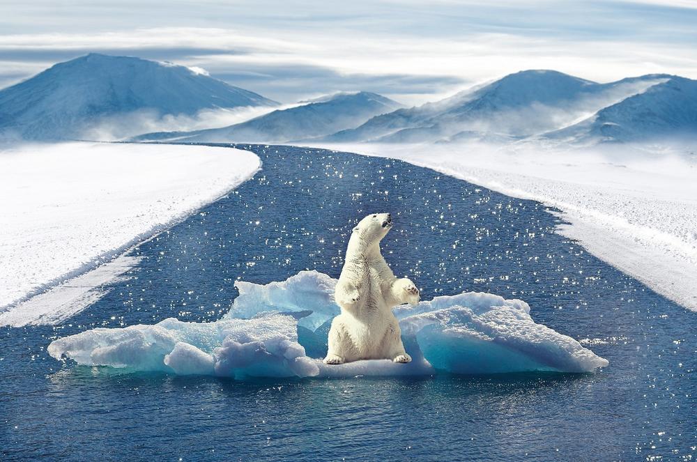 Klimaschutz Eisbaer