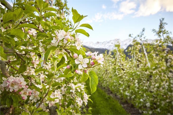 LR Schuler und die Spitzenvertreter der Erzeugerorganisationen der Obstwirtschaft treten wie angekündigt als Nebenkläger aus den Strafprozessen gegen Umweltinstitut München und Schiebel zurück.