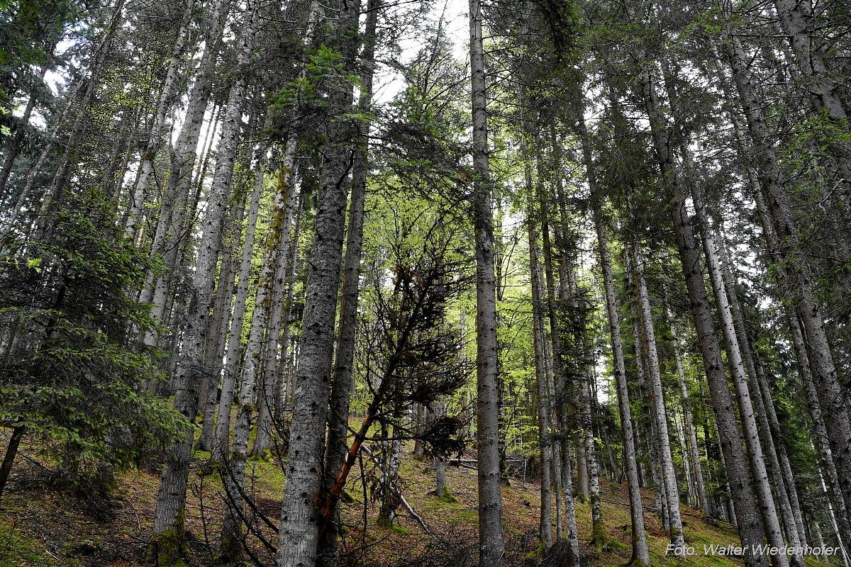 Die Natur ist Balsam für unsere Seele - diewurzel.com
