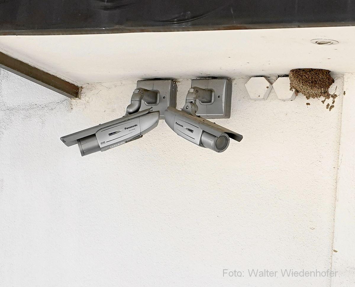 Schwalbennest neben den beiden Überwachungskameras